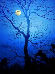 bare tree & moon