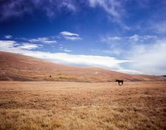 Western Landscape Photography Horse on the plains, Wyoming  - by Lost Kat Photo lostkat.com