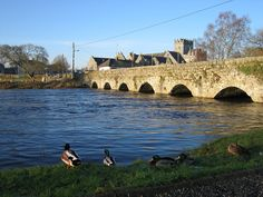 Best Fishing in Ireland   The Best Fishing Places in Ireland for Specimen Fish   Holidays Around ...