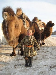Child of the world with camels