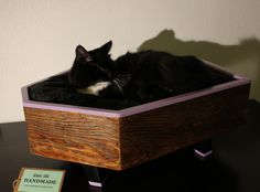 coffin furniture | Catsparella: Morbidly Adorable: Coffin Shaped Cat Beds