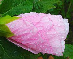 【 教秀 書写 書道 】花【 Kyoushhu japanese calligraphy 】flower