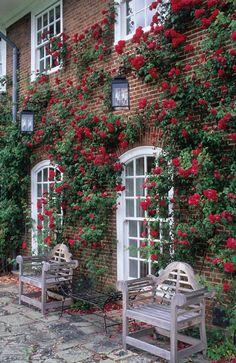 Red climbing roses on a brick building facade with white window trim. Red climbing roses on a brick Wall Of Roses, Rose Wall, Rose Cottage, Garden Cottage, Home And Garden, Beautiful Roses, Beautiful Gardens, Red Climbing Roses, White Window Trim