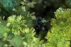 Undo the Dry Spell: Treasures of the Earth 3 Wavelite