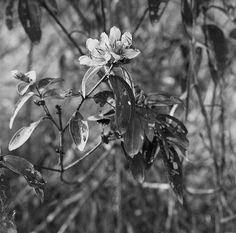 wild flower #2