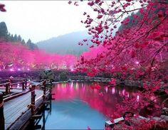 Paisagem cor de rosa!
