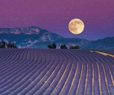 May the fullness of the Moon light your path to peace and love.
