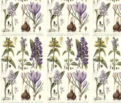 Antique botanical drawing in lavenders on white fabric by ginanelson on Spoonflower - custom fabric