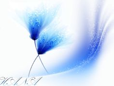 Vector flowers - Vector flower with addition of light blue and white brushes ... photoshopCs6
