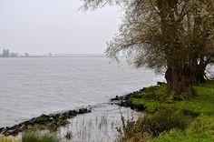 Dordrecht, bomen aan de oever Nieuwe Merwede