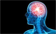 5 hallazgos del cerebro humano en 2014 www.farmaciafrancesa.com