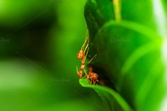 Red ants making nest by Pushish Images on @creativemarket