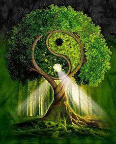 Arbol del Yin y Yang
