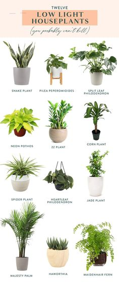 Twelve Low Light Indoor Plants You Probably Can't Kill How's your green thumb? If it could stand to be a little greener, check out our list of twelve low light indoor plants you probably can't kill. Brighten up your space with some houseplants! Indoor Plants Low Light, Best Indoor Plants, Easy Care Indoor Plants, Indoor Floor Plants, Low Light Houseplants, Indoor Plant Stands, Indoor Plant Decor, Low Light Succulents, Indoor Plants Names