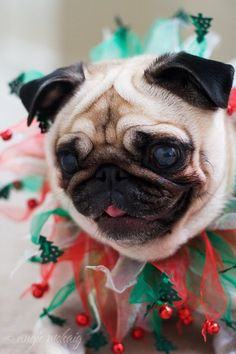 Christmas Pug Merry Christmas Card Puppy Holiday Dogs Santa Claus Dog Puppies Xmas
