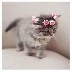 SnapWidget | Adorable. {credit unknown} #kitten #cute #wedding #flowercrown