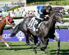 Mizdirection(2008) Mizzen Mast- Deceptive By Clever Trick. 5x5 To Buckpasser. 17 Starts 11 Wins 4 Seconds 1 Third. Filly Won Back To Back BC Turf Sprint(G1) In 2012 And 2013. Days After 2nd BC Win, Went Through Breeding Stock Sale For 2.7 Million And Sent To Qatar.