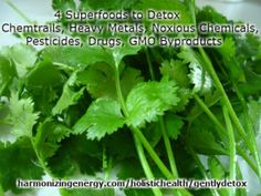 Gently Detox With 4 Superfoods to Remove Toxins From Chemtrails, Heavy Metals, Noxious Chemicals, Pesticides, Drugs, GMO Byproducts