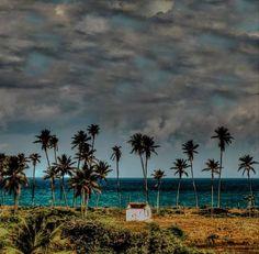 Dunas, coqueiros e águas mornas formam a idílica paisagem do litoral nordestino. Verões secos e de sol intenso atraem turistas do mundo inteiro fugindo do inverno no hemisfério norte.