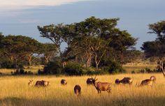 Queen Elizabeth National Park, Uganda | queen elizabeth national park uganda equator source of the nile ...