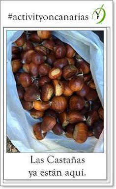 El otoño es tiempo de castaña @Tejeda_GC  l @SantaBrigidaGC @Ramon_SuarezO @Love_Canarias @EmocionesCan