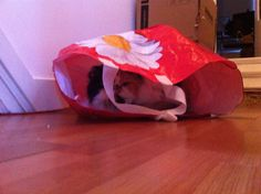 Kat in de zak gekocht