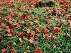 Fall Foliage of Eikando Zenrinji, Kyoto. Kyoto, Travel Photos, Tours, Fall, Outdoor Decor, Autumn, Travel Pictures, Fall Season
