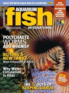 22 Best Cheap Magazine Subscriptions images | Cheap magazine