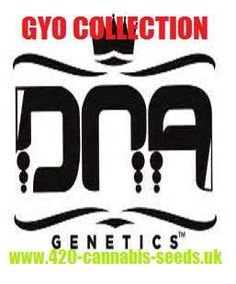 DNA Genetics - GYO Collection