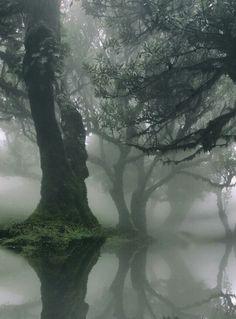 Beautiful morning mist