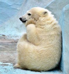 ️ADORABLE polar bear❤️I'm Grateful for all creatures❤️