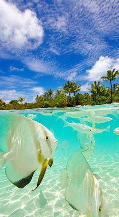 Places i might to go on pinterest taj mahal australia for Places to fish around me