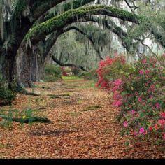 Tree arch path