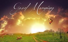 155 Best Good Morning Wallpapers Images Good Morning Picture Good