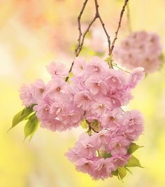 A Fatal Gift of Beauty Pink Love, Pink Yellow, Pale Pink, Pink Color, Pink And Green, Pink White, Hot Pink, Yellow Cottage, Spring Bouquet