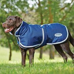 Comfitec Parka with Belly Wrap 1200 Denier Dog Blanket Weatherbeeta - Dog Blankets Waterproof Dog Coats, Blanket Coat, Dog Sweaters, Medium Dogs, Working Dogs, Dog Accessories, Bleu Marine, Grey And White, Outfits