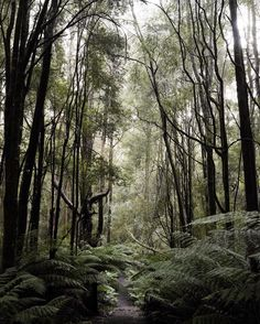 Lost in the woods. #otwaynationalpark #wandervictoria #greatoceanroad by rae_drake