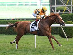 Wise Dan, horse of the year