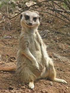 Google Afbeeldingen resultaat voor http://3.bp.blogspot.com/-qPVjodFq9fI/TXdHoXFMGKI/AAAAAAAAGOI/zwNFbozro6A/s1600/little_creature_puts_a_smile.jpg
