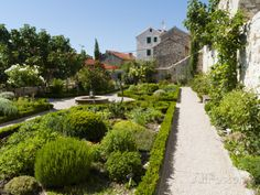 mediterranean backyard pictures   Medieval Mediterranean Garden of St. Lawrence Monastery, Sibenik ...