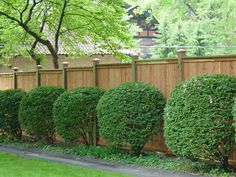 Wood Fence Gates, Cedar Fence, Fencing Companies, Custom Wood, Picture Frames, Modern Design, Backyard, Building, Plants