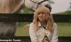 Horse....