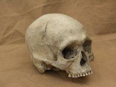 Human skull 12 jpeg by Pronus