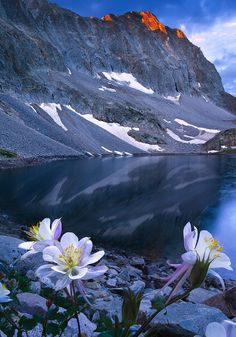 """coiour-my-world: """" Capitol Bouquet by wboland on Flickr. Sunrise @ Capitol Lake """""""