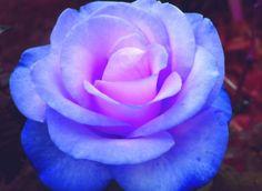 blue & lavender ♥
