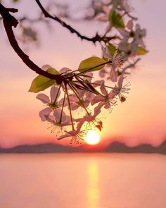 Flower Wallpaper, Nature Wallpaper, Beautiful Flowers Wallpapers, Beautiful Sunset, Beautiful Landscapes, Wonders Of The World, Nature Photography, Beautiful Pictures, Scenery