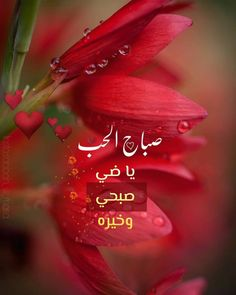 Good Morning Arabic, Good Morning Images Flowers, Faia, Morning Wish, Morning Greeting, Beautiful Morning, Morning Quotes, Roses, Neon Signs