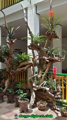 Looks like the jungle in peru with giant bromeliads clinging to the trees bromeliads clinging giant greatindoors jungle peru treesUnique Kokedama Ball Ideas for Hanging Garden Plants selber machen Finest Succulent Garden Concepts Around The Wo