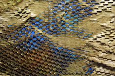 painted snakeskin - Google Search
