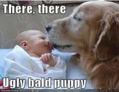 I love how our dogs love our kids.